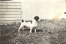 Original 1920s-40s Real Photo- Animal- Dog- Spaniel Puppy- Outdoors- Pointing
