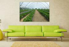 Stunning Poster Wall Art Decor Greenhouse Green House Hothouse 36x24 Inches