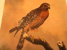 Charles Frace ( Red Shouldered Hawk ) autographed lithograph Print# 361/2000