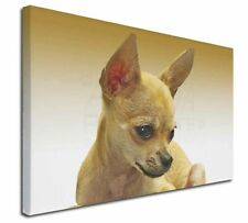 More details for chihuahua x-large 30