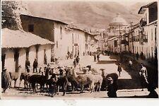 B81787  una calle cazco llama animals types peru front/back image