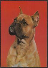 AA5728 Esemplare di cane - Cartolina postale - Postcard