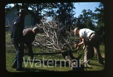 1950s red border Kodachrome photo slide men sawing a tree  Cutting saw tool