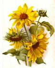 """Counted Cross Stitch Kit """"Sunflowers"""" by Andrea's Designs"""