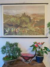 Meraviglioso Vintage Pull Down SCUOLA tabellone di una piantagione di tè-Botanico