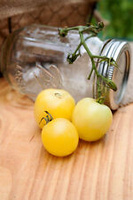 Super Snow White Heirloom Tomato Premium Seed Packet