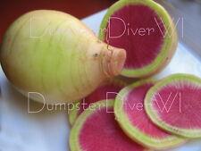 Watermelon RADISH Organic Heirloom 150+ seeds Beautiful tasty Crispy NON-GMO