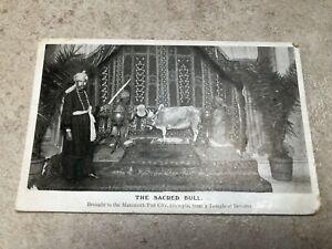 1908 postcard - the sacred bull ( mammoth fun city olympia )