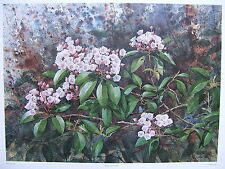MOUNTAIN LAUREL by Jim Gray - 1984 -Signed, Numbered, Limited Edition Lithograph