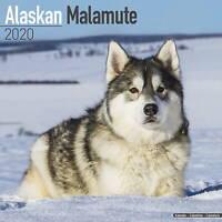 Alaskan Malamute Calendar 2020 Premium Dog Breed Calendars