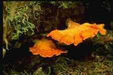 158092 sulpur étagère dans l'habitat A4 papier photo