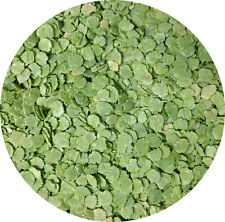 More details for flaked peas 10kg 5kg 1.8kg 2kg 1.5kg 1kg 700g 500g 250g dried pea small animal