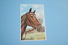 Postcard Type Card, Horse, Used