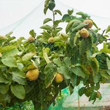 Green Anti Bird Plant Pond Garden Netting Veg Fruit Cover Net Protection Mesh