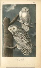 Búho nival 6x4 pulgadas impresión pájaro Naturaleza Arte América noche vintage