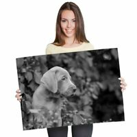 A1 - Weimaraner Puppy Dog Cute Pet Animal 60X90cm180gsm Print BW #43753