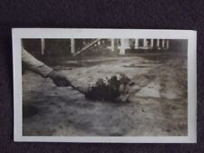 ABSTRACT 1920's PHOTO - ARM PULLING TAIL OF MOTHER POSSOM COVERED IN BABIES