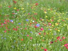 Gazon Japonais mélange fleurs graminée floraison tout l'été 5 grammes