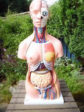 66fit Anatómicos Humano Unisex Torso enseñanza ayuda, 40 piezas de 85 cm de altura