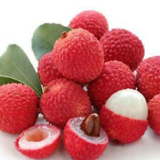 10-Pcs-Lychee-Tree-Seeds-Outdoor-Fruit-Tree-Seeds-for-Home-Garden-Planting