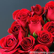 Fresh Cut Red Roses, Flower Delivery, Bouquet-Event-Party-Diy-B ulk (24roses)