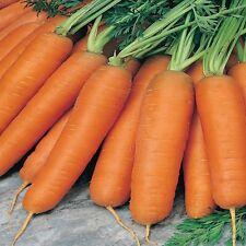 10 gr Zanahoria Nantesa 5 (S)