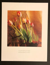 TULIP REFLECTION PHOTOGRAPH BY SUSAN FRIEDMAN 16x20 PRINT