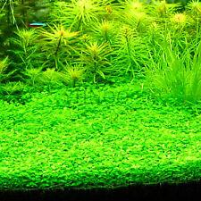 Bag Aquarium Grass Seeds Plants Bonsai Water Grasses Random Aquatic A 300pcs