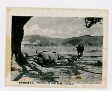 Pre WW2 China Photograph Hong Kong 1930s Farming in the New Territories Photo
