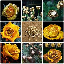 150pcs Flor de rosa de oro rara semillas de plantas de crecimiento Natural rosas