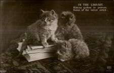 Fluffy Long-Haired Kittens Cats In The Library c1910 Postcard