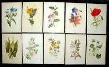 32  FAMILIAR Wild Flower Book Plates F hulme Removed from Book, GOOD TO FRAME