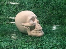 LATEX ONLY MOULD SKULL 20CM TALL ORNAMENT MOULD