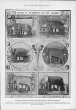 1907 Antique Print - ANIMALS Elephant Taxidermy Specimens Museum America (138)