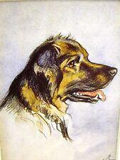 Lucy Dawson Mixed Breed Sherherd Film Star Collector Card 1930-40s Dog Art Mat