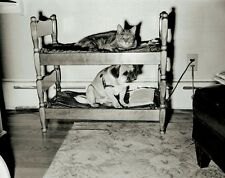 Vintage Funny Photo Print of a Pet Bunk Bed Top Bunk for Cat Bottom for PUG DOG