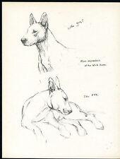 BULL TERRIER STUDIES OF THE WHITE HOPE VINTAGE 1930'S DOG ART PRINT by KF BARKER