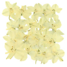 Pressed flowers, white delphinium 20pcs for floral art craft scrapbooking