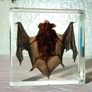 Best Quality Real Bat in Resin, Real Bat in Lucite, Oddities, Curiosities