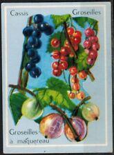Carte Chromo - Image -Cassis-Groseille-Groseilles à Maquereau - Fruits - Réf.177