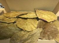 1 Karton Seemandelbaumblätter ca 100gramm 15-20cm XL Catappa Leaves Gesundheit