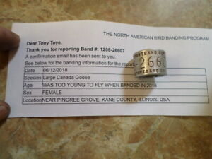 100% Illinois Federal Canada Goose WWW. Report Band .GOV STYLE 1208 Bird Duck