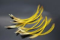 50 Pcs 3 Sizes Natural Golden Color Pheasant Crest Feather Fly Tying Materials