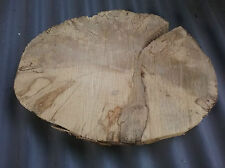 Baumscheibe, Holzscheibe, 2-15, Hainbuche, naturbelassen, Holz, Deko, Bastelholz