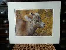 1990 Mountain Baby Bighorn Sheep Mounted Limited Edition Print Carl Brenders
