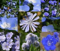 WILDFLOWER BLUE MIX - 1 Oz Bulk Seeds