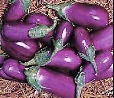 PUERTO RICAN PRODUCTS -BERENJENA DEL PAIS 15 SEEDS