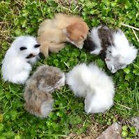 Set of 5 Mini Realistic Cats Lifelike Baby Kittens Cute Furry Kitties Replica