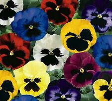 Pansy Swiss Giant Flower Seeds - Garden Seeds - Bulk