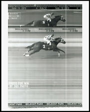SECRETARIAT - 8X10 BELMONT STAKES PHOTO FINISH LINE CAMERA HORSE RACING PHOTO!!